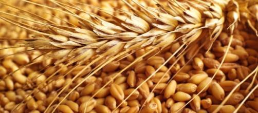 Cambio de ciclo: EE.UU. aumenta sus compras de trigo a la ... - com.ar