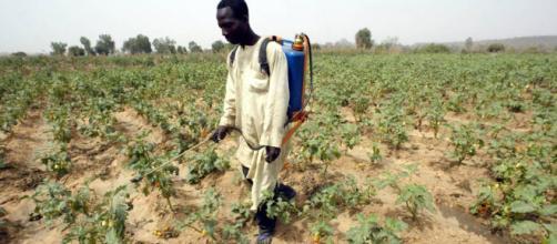 Pesticidas: Choque por los plaguicidas químicos | Planeta Futuro ... - elpais.com