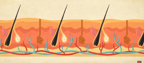 Skin elasticity and overall wellness is highly dependent on what you put inside your body. [Image source: TED -Ed]