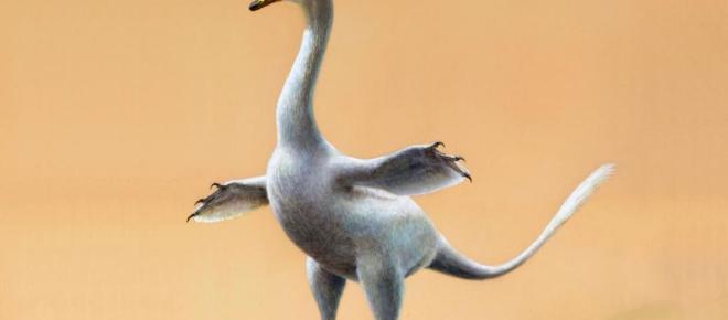 Descubierto nuevo dinosaurio que se parece a una mezcla de cisne con Pingüino