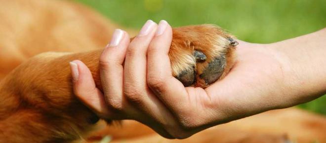El poder curativo que poseen las mascotas