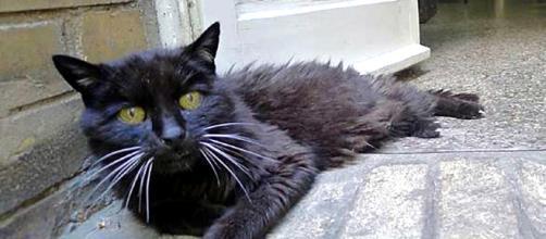 Kimba el Gato Desaparecido 18 años vuelve con su dueño