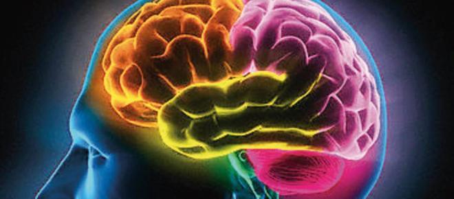 Cómo los cerebros humanos se volvieron tan grandes