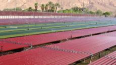 Nuevas tecnologías para la ayuda de el sector agropecuario.