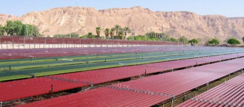 12 empresas de tecnología agrícola de Israel que están cambiando ... - israel21c.org