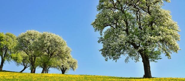 Científicos descubren que los árboles tiene 'latido'