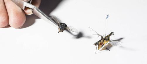 Il primo insetto robotico che vola da solo