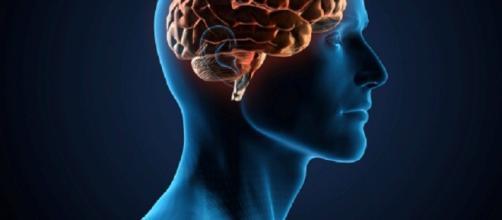 Las memorias a corto plazo no se transforman en recuerdos a largo plazo