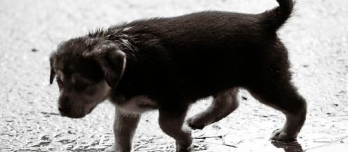 planeta deuda news: ¿Eres capaz de salvar a tu mascota en caso que ... - blogspot.com