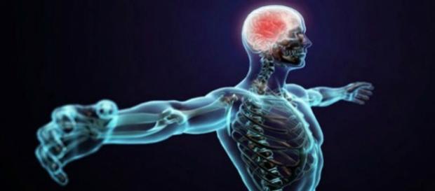 Como funciona o corpo humano e como é constituído? Existem muitas curiosidades que rondam este assunto.