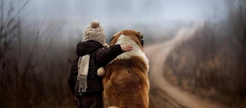 Los perros enseñan inteligencia emocional