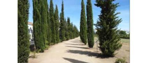A filosofia epicurista ensina a moderação como forma de atingir um estado de tranquilidade. www.google.com.br