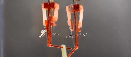Robot con muscoli veri: dita cyborg