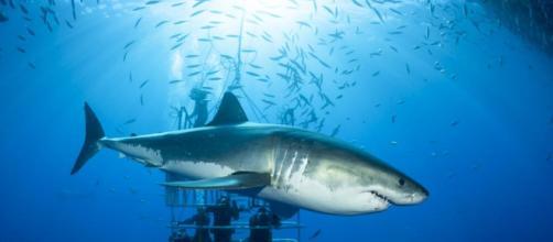 con tiburones, un motivo para su conservación - lavanguardia.com