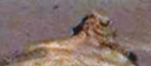 Vita su Marte: la Nasa ha trovato una sfinge?