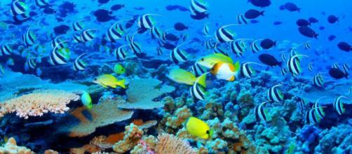Hawaii: vietate creme solari per salvare ecosistema marino