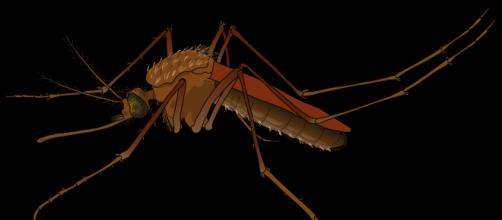 Illnesses surge from dangerous insect bites. - [Image via: female.svg - Wikimedia Commons]