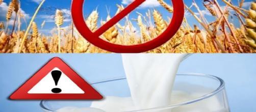 Protege tu cuerpo: Las proteínas de la leche vacuna y del trigo - sott.net