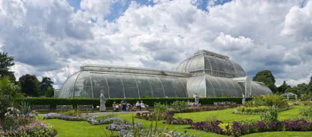 los especímenes más raros y más amenazados, para los cuales el jardín botánico es un refugio final