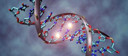 estructura similar a una célula que aprovecha la fotosíntesis