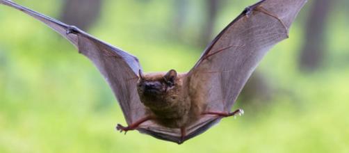 Los murciélagos patrullan la ciudad - okdiario.com