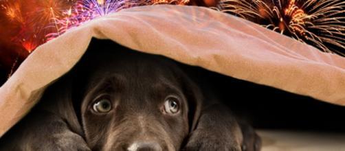 Os cachorros são sensíveis a barulhos intensos