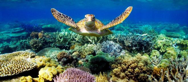 Addio alla grande barriera corallina australiana?