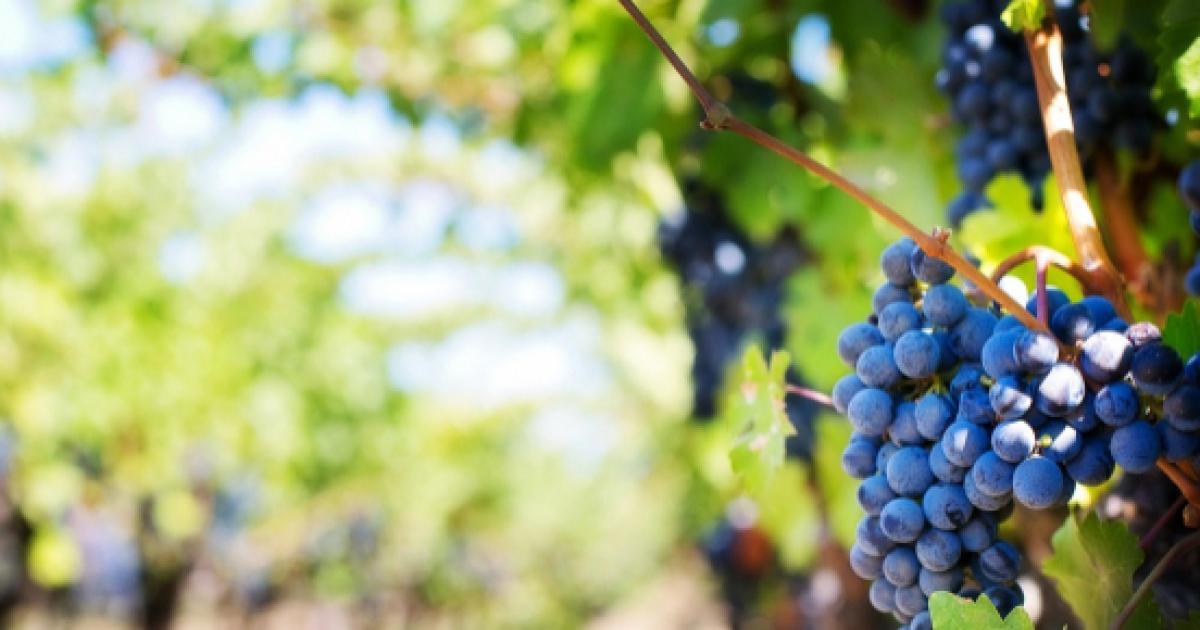 Dazi USA: a rischio anche l'agroalimentare italiano