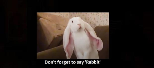 Don't forget to say 'Rabbit' before you say anything else on the first day of each month. Photo: The Dodo/YouTube Screenshot