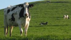 El bienestar animal mejora los resultados de productores y empresas alimentarias