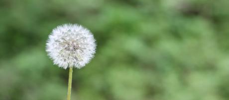 La alergia y su tratamiento natural - Remedios Naturales - remediosnaturales.es