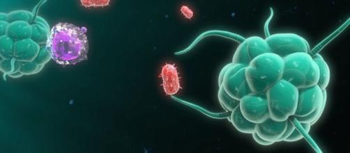 Cuatro nuevos tipos de células de la sangre revolucionan la elespanol.com