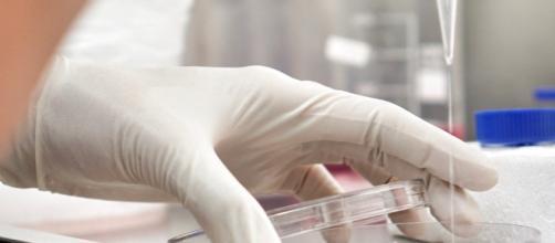 Dos estudios muestran los beneficios de las terapias con células - observatorioesclerosismultiple.com