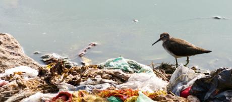 Playa llena de residuos plásticos.