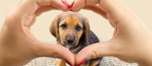 Mascotas: un regalo con cierto compromiso