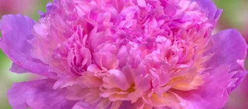 A pretty flower. - [BaLu - Relaxing Nature / YouTube screencap]
