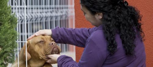 Por qué nos sentimos tan apegados a nuestros perros