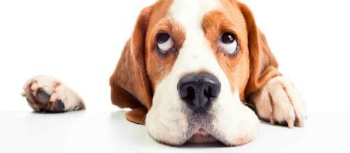 Alimentos que jamas debes darle tu perro