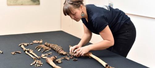 Cientos de huesos son hallados en una isla de New York