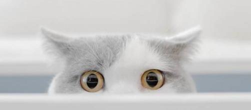 ¿Quieres saber por qué tu gato te mira con excesiva fijeza?