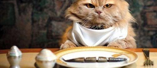 Gato comiendo, no todo lo que come es bueno para él