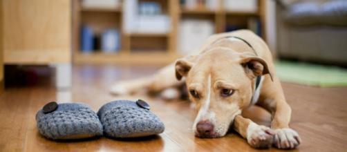 Duelo en una mascota: Tips, Fotos y Vídeos de Duelo en una mascota - com.co