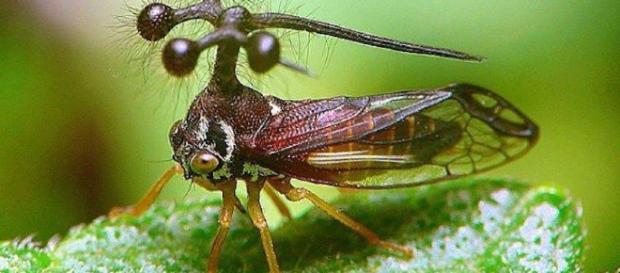 Insectos que nadie creería que son reales. - NoCreasNada - nocreasnada.com