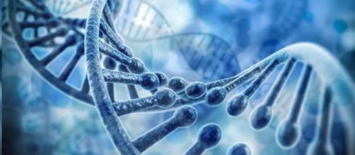"""El ADN viral """"basura"""", la dieta cetogénica que mejora el ADN y la health-matrix.net"""