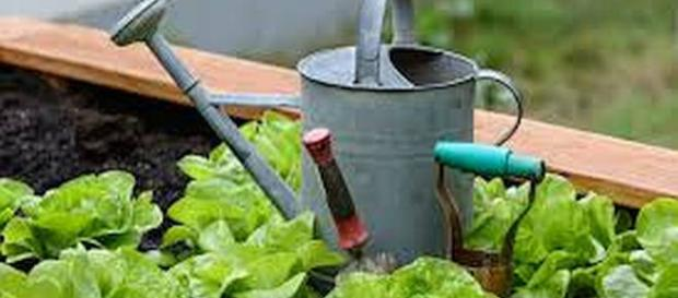 Gardening has a lot of health benefits. - [Wikimedia Commons / Public Domain]