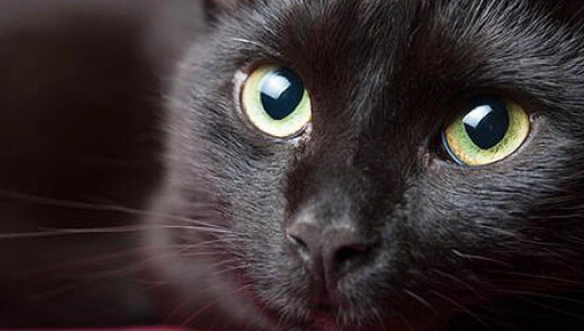 Résultat de recherche d'images pour gatos coreanos divertidos