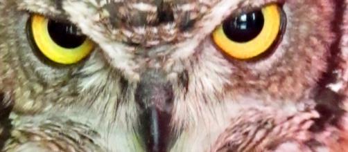 Búho, alondra o colibrí? : la fauna del sueño. – Dormir mejor - dormirmejor.es
