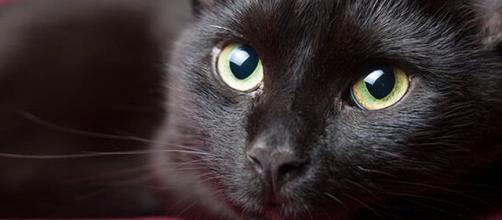 El color de tu gato define qué carácter tiene
