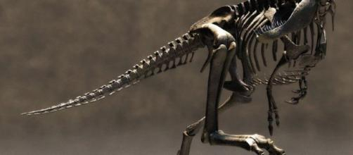 fondos de pantalla de Esqueleto de Tiranosaurio. wallpapers de ... - defondos.com
