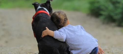 Niños y mascotas: Cómo convivir - Kafito, Díselo a Mamá. - kafito.es